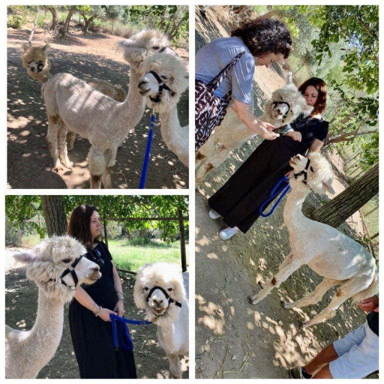 My visit at Basilicata Alpaca